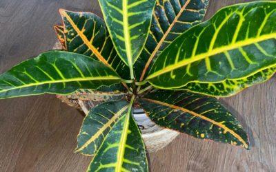 Beste planten voor hydrocultuur: Dit is de top 8