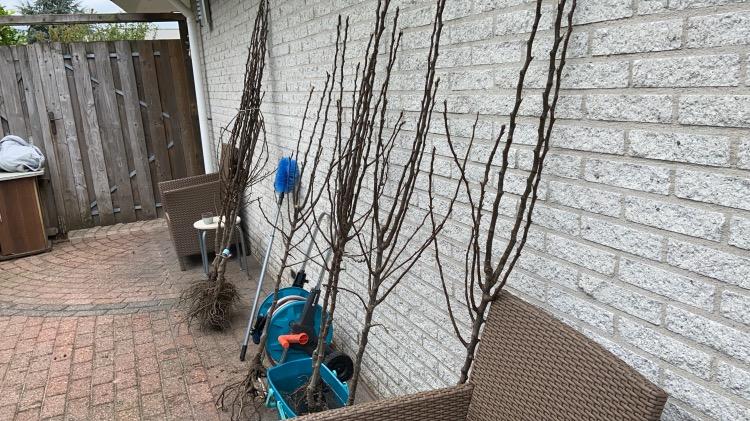 gratis fruitbomen planten