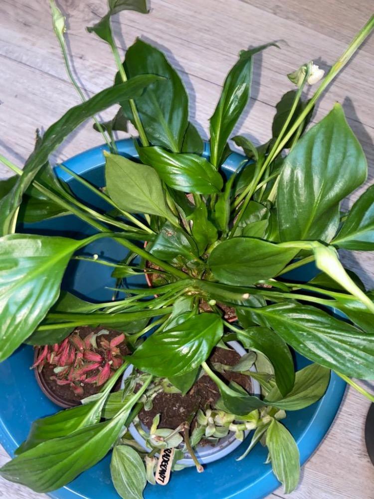 Beste planten voor hydrocultuur